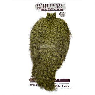 Whiting Bronze Spey Hackle Cape Grizzly Dyed Olive