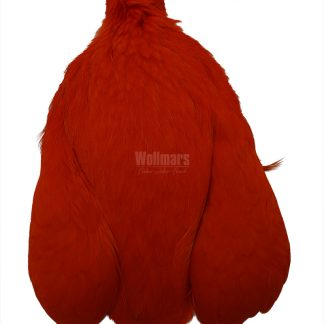 Whiting 4B´s Hen Cape