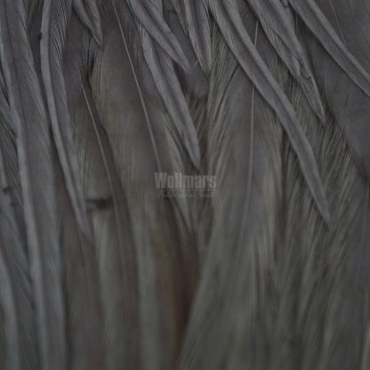 Whiting Bugger Pk White Dyed Medium Dun