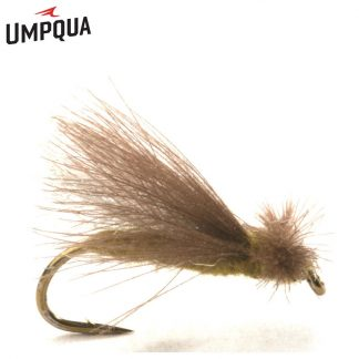 CDC_Caddis_Adult_Olive