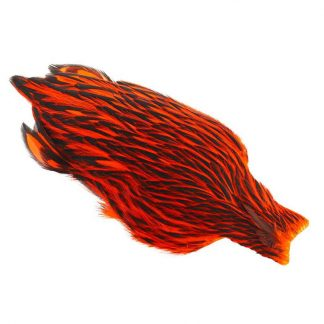 Whiting_American_Hen_Cape_Black_Laced_BLW_dyed_Orange