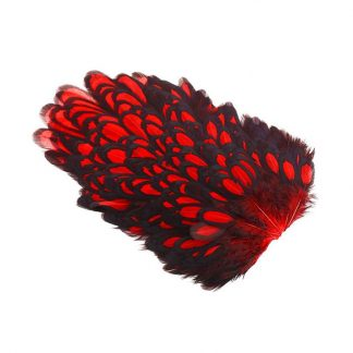 Whiting_American_Hen_Saddle_Black_Laced_BLW_dyed_Red
