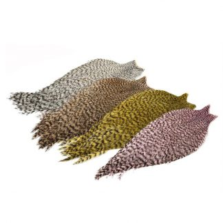 Whiting_American_Rooster_Cape